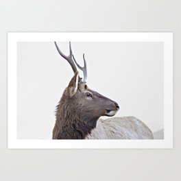 Deer, animal Art Print
