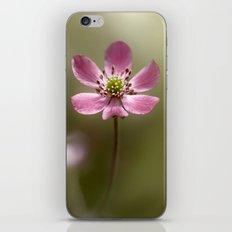 Hepatica iPhone & iPod Skin