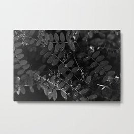 Dark nature Metal Print
