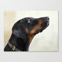 doberman Canvas Prints featuring Doberman by lifeandthat photography