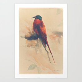 Carmine Bee-eater Art Print