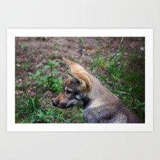 Canis Lupus Lupus Art Print