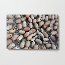 Acorns with Holes No.2 Metal Print