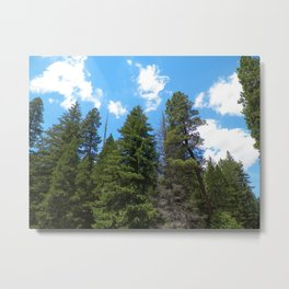 Old Growth Metal Print
