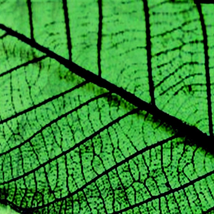 Foliage 2 Leggings
