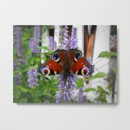 Butterfly & her flower Metal Print