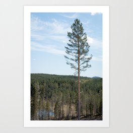 Landscape with a single pine tree standing tall Art Print