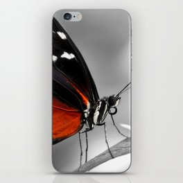 Butterfly 22 iPhone Skin