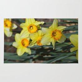 Daffodills Rug