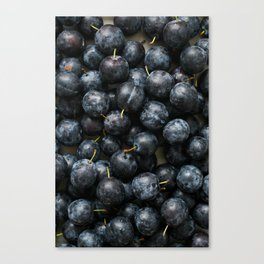 Damson Plums Canvas Print