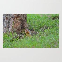 Columbian ground squirrel in Jasper National Park Rug