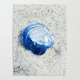 Blue Seashell By Sharon Cummings Poster
