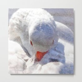 White Preening Duck - Feather and Down Close Up Metal Print