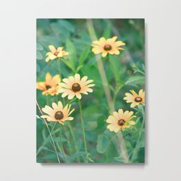 Black-Eyed Susan Yellow Flowers Nature Photography Metal Print