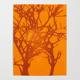 Sunlight and Tree Silhouettes Poster