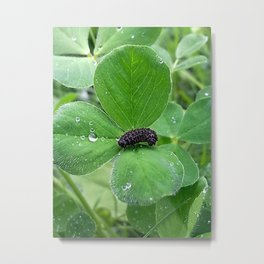 Bug in the rain Metal Print
