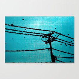 blue birds Canvas Print