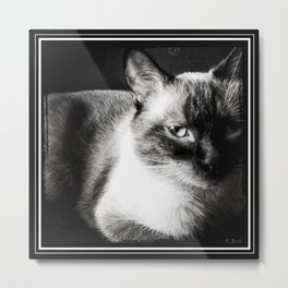 Stoney - Dramatic Metal Print