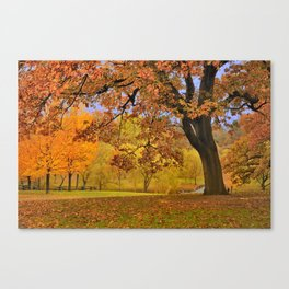 Fall at Larz Anderson Canvas Print