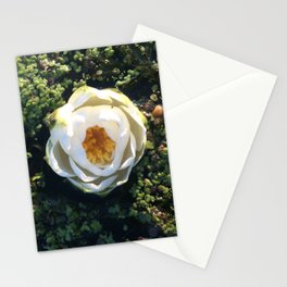 Naturals by Nikki - White Water Lily (closed) Stationery Cards