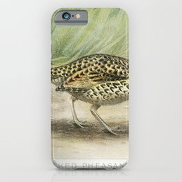 Ring-Necked Pheasant Female (Phasianus Torquatus) illustrated by JL Ridgway (1859-1947) and WB Gille iPhone Case