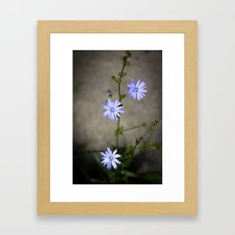 Chicory In The Concrete Jungle Framed Art Print