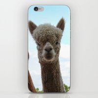 alpaca iPhone & iPod Skins featuring Alpaca by SC Photography