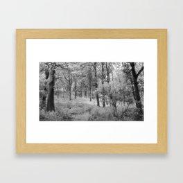 Platinum Forest Framed Art Print