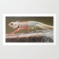 chameleon Art Prints featuring Chameleon  by Four Hands Art