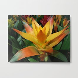 Orange guzmania tropical flower Metal Print