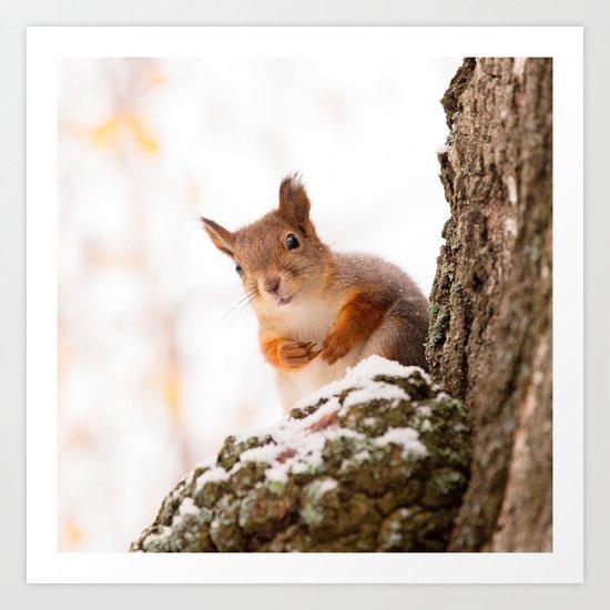 Squirrel in first snow Art Print