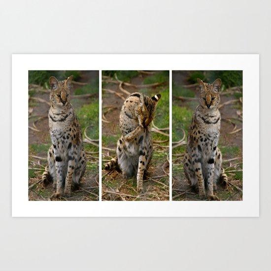 Serval Triptych Art Print