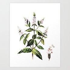 watercolor peppermint Art Print