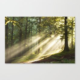 Morning Sunbeams Canvas Print