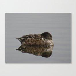 Beautiful duck at John Heinz Wildlife Refuge Philadelphia Canvas Print
