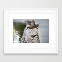 ducks Framed Art Prints featuring Ducks by The Fort Co.