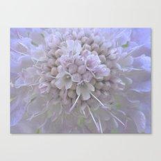 Une Fleur parmi les Fleurs Canvas Print