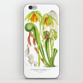 Cobra Plant (Darlingtonia Californica) iPhone Skin