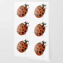 Harmonia axyridus - Asian Ladybeetle Wallpaper