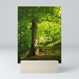 Beech Tree Mini Art Print
