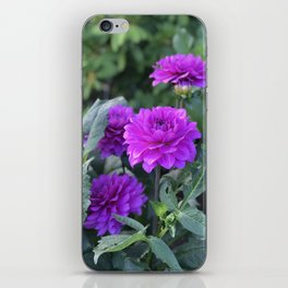 Purple flower in Butchart's Garden iPhone Skin