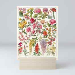 Flowers Larousse Pour Tous French Encyclopedia Lithograph Illustration Vintage Scientific Art Mini Art Print