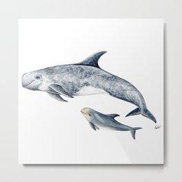 Risso´s Dolphin Metal Print