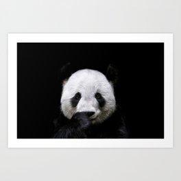 Lovely giant panda portrait on black background Art Print