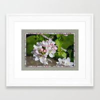 will ferrell Framed Art Prints featuring APPLE BLOSSOM by Alpine Seaside Landscapes