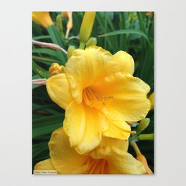 Yellow1 Canvas Print