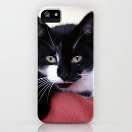 Cute Cat (Humbug) iPhone Case