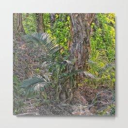 Beautiful rain forest growth Metal Print