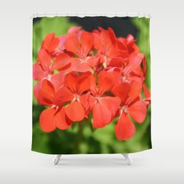 Red Geranium Pelargonium hortorum Shower Curtain