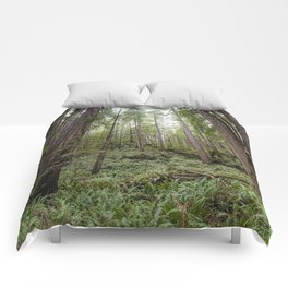 Fern Alley - Redwood Forest Nature Photography Comforters